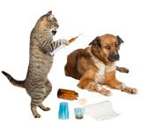 Veterinarian cat treating sick dog on white
